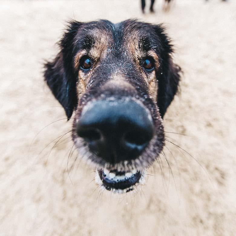Hundestrand Nethen